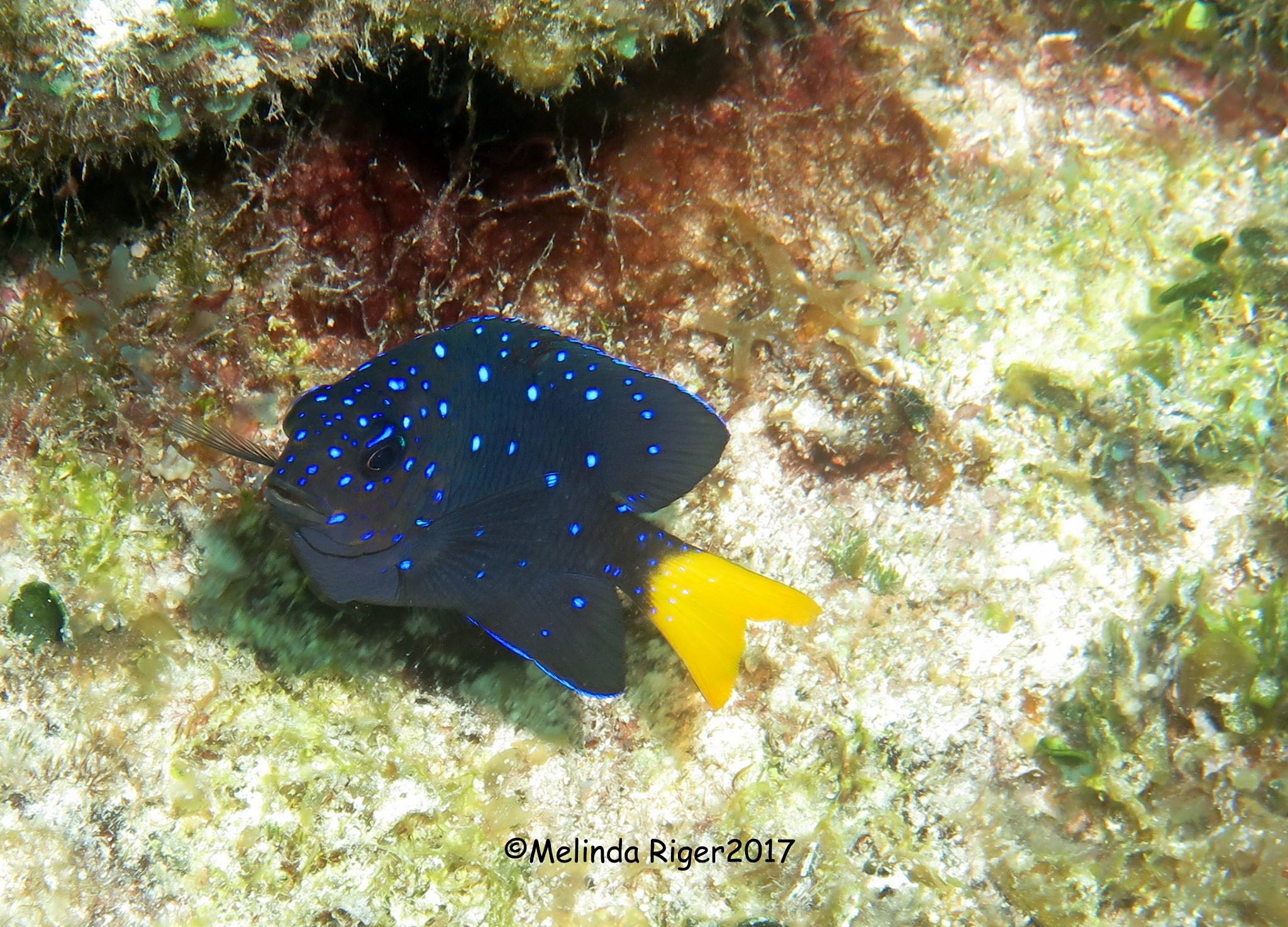 Reef Fish Abaco Bahamas | ROLLING HARBOUR ABACO
