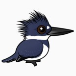 Belted Kingfisher (Birdorable)
