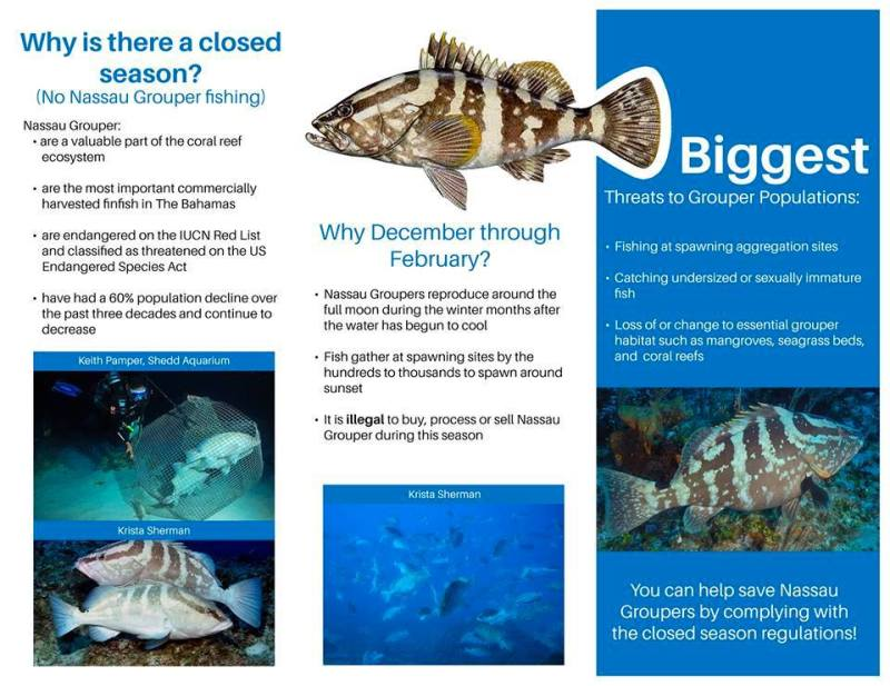 Nassau Grouper Infographic (Royal Defence Force)