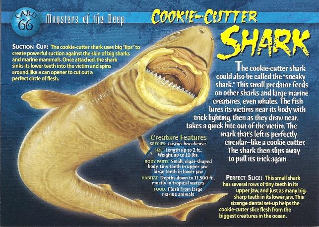 Cookiecutter Shark Facts (Monsters of the Deep)