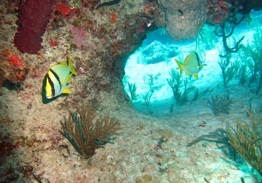 Reef Fish Abaco Bahamas Rolling Harbour Abaco