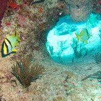 BAHAMAS REEF FISH (44): PORKFISH