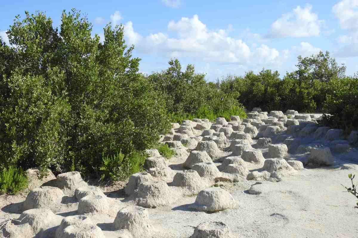 Flamingo nests, Inagua Bahamas (Melissa Maura)