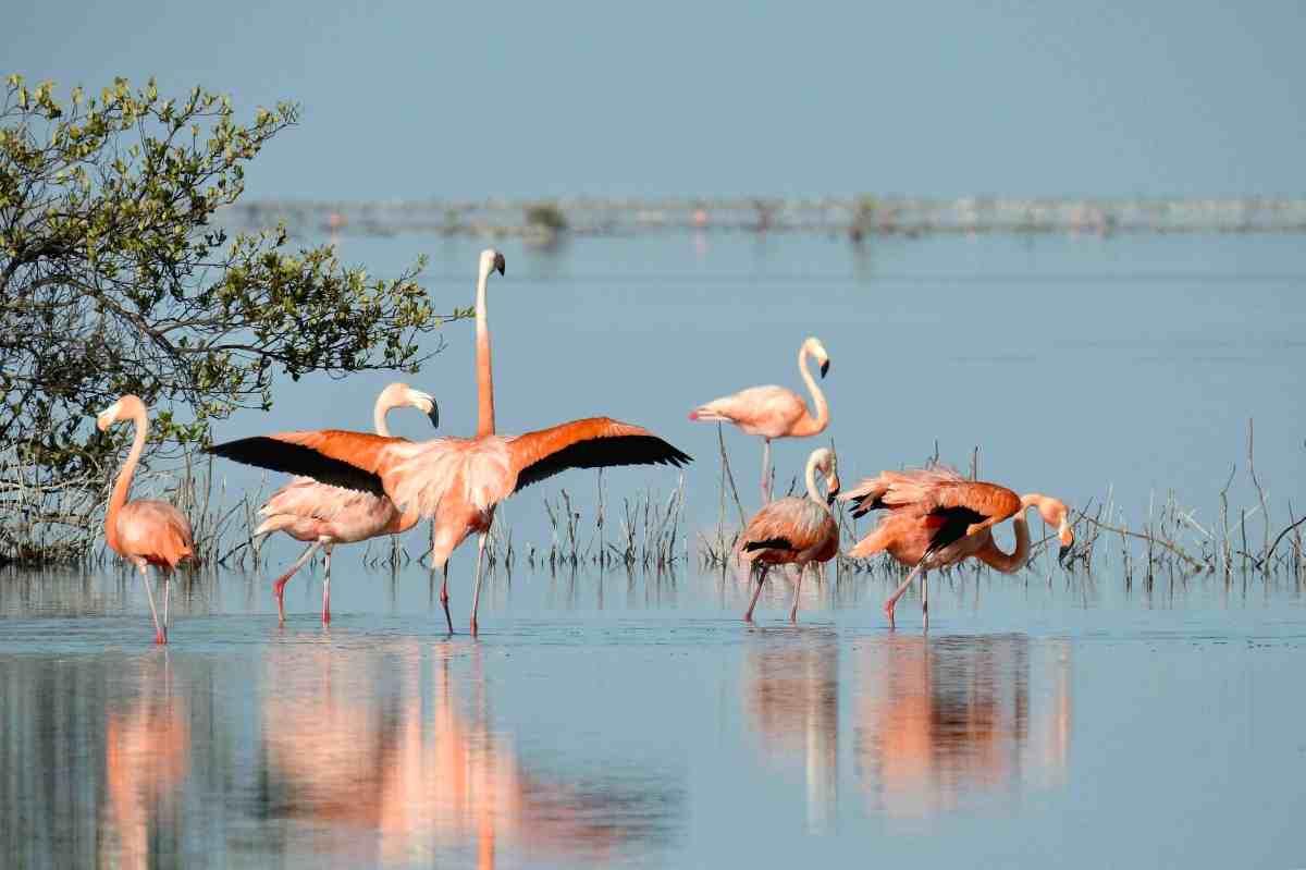 Flamingos & Chicks, Inagua Bahamas (Melissa Maura)