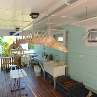THE ARTICULATE WHALE (2): MARINE SCIENCE ON DISPLAY