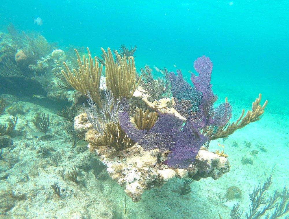 Reef Corals, Bahamas (Melinda Riger / G B Scuba)