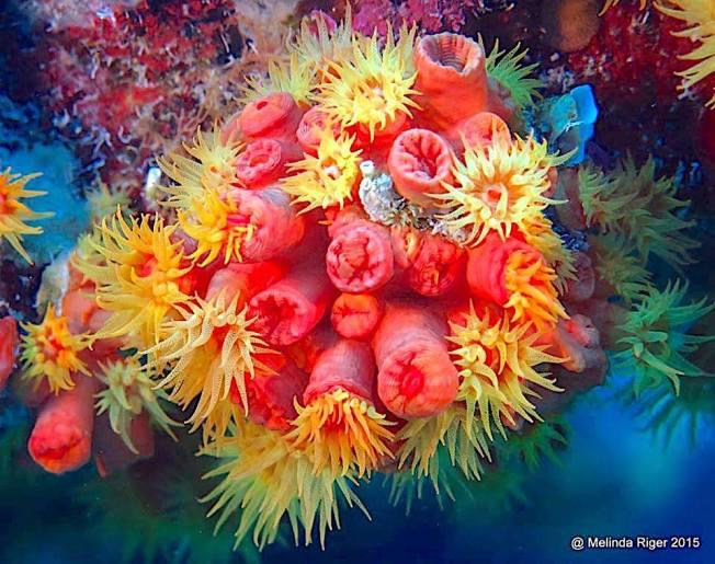 Corals - Bahamas