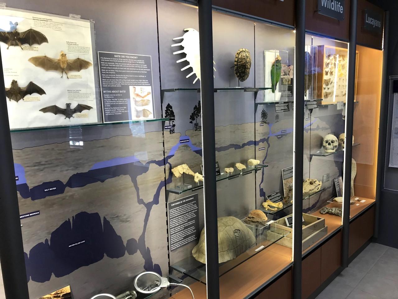 Museum of Natural History, Abaco Bahamas