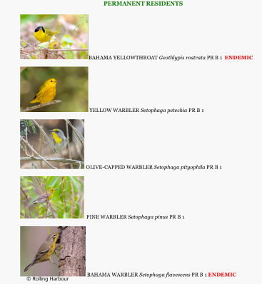 Abaco's 37 warbler species - permanent residents (Keith Salvesen)