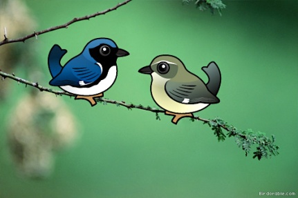 Black-throated Blue Warbler (m & f comparison) (Birdorable)