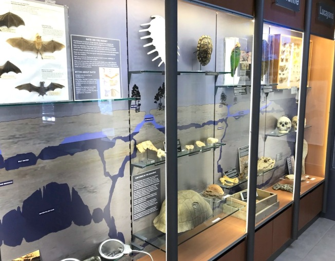Display cases, Natural History Museum Abaco Bahamas (Keith Salvesen / Abaco Field Office AMMC)