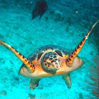 BAHAMAS TURTLES: BE AWARE BUT DON'T BEWARE