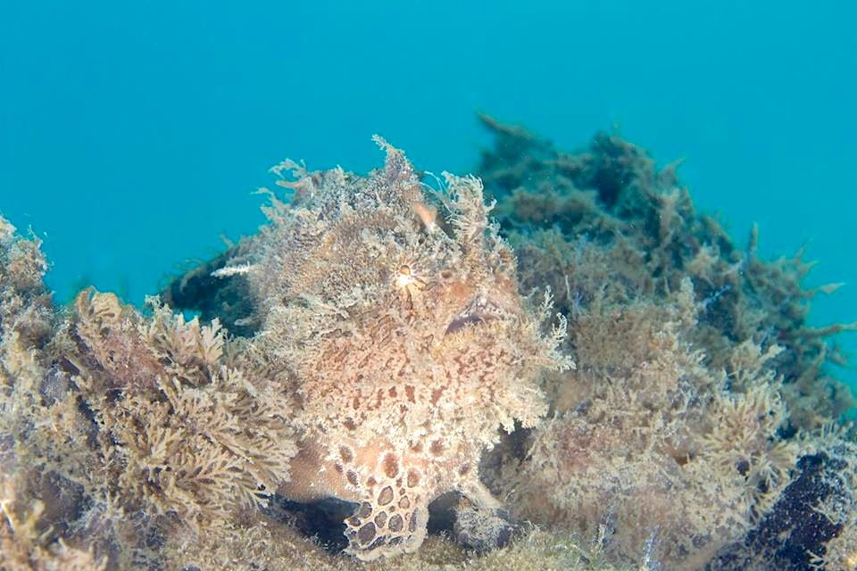 Frogfish (Adam Rees / Scuba Works)