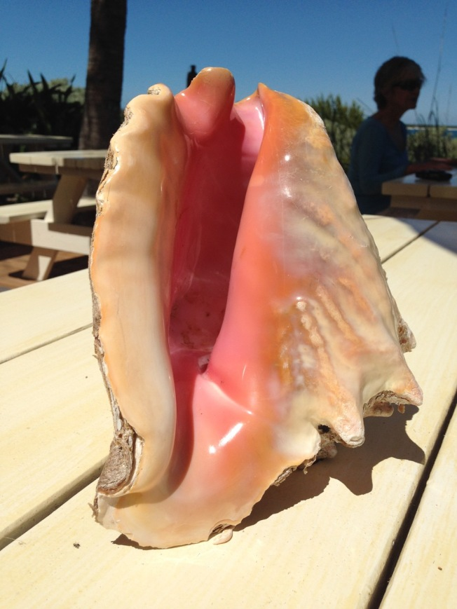 Conch shell, Schooner Bay Abaco Bahamas (Keith Salvesen)