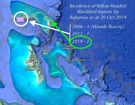 Map: incidence of Yellow-winged Blackbirds in Bahamas