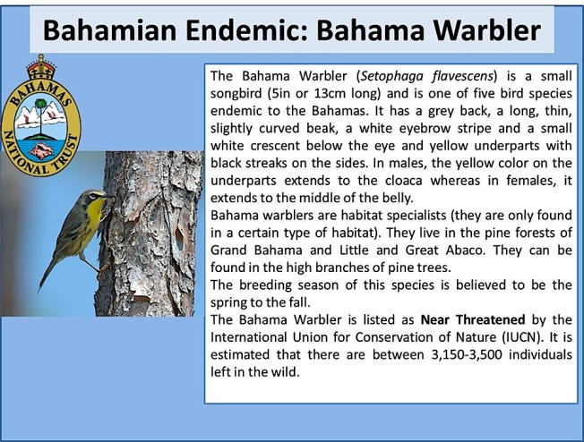 BNT infographic Bahama Warbler