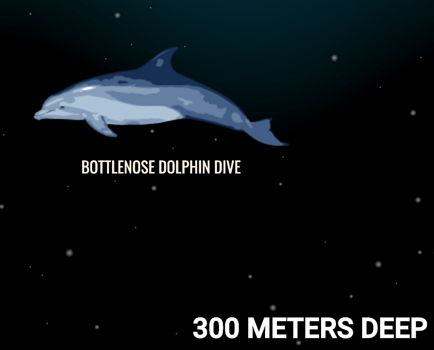 Dolphin dive depth (Neal)