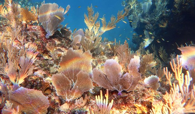 coral-in-sunlight-melinda-rogers-dive-abaco