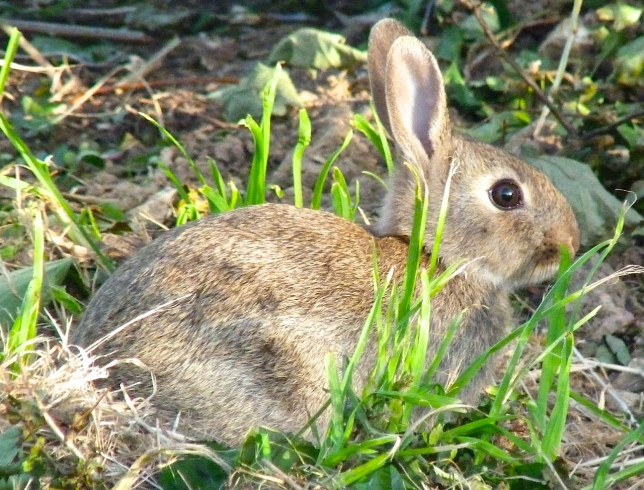 Rabbit, Dorset UK (Keith Salvesen / Rolling Harbour)