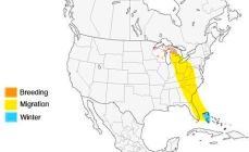 Kirtland's Warbler Range Map wiki